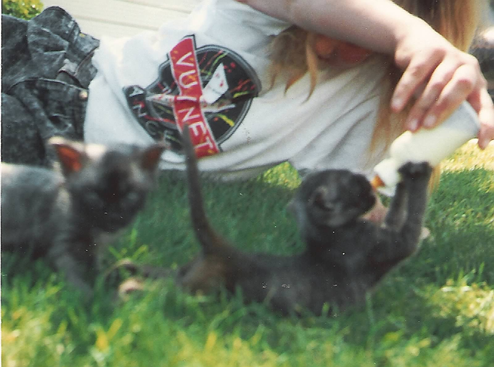 I was 13 when I bottle fed my first kittens. These little ones were abandoned and my mother found them while camping.