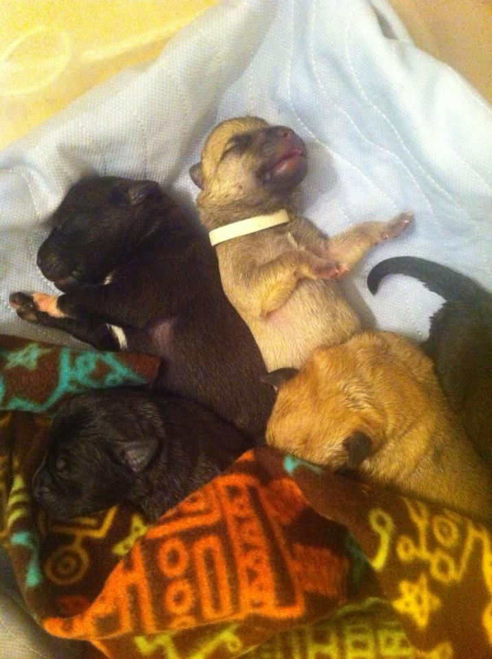 All tucked into their storage bin with a heating pad, washable puppy pad, and fleece blankets.