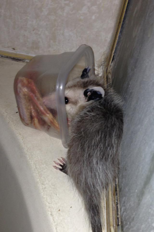 blog hommade possum