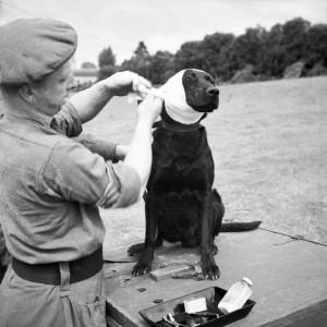 WWII dog