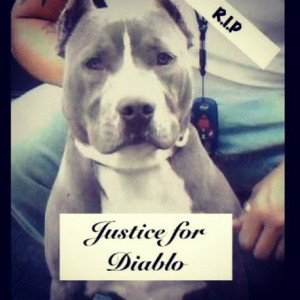 Diablo was shot and killed by police