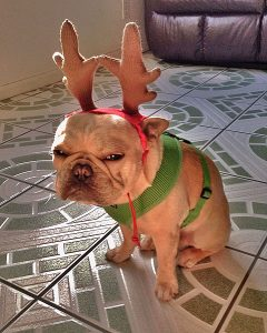 christmas-dogs-pissed-off-08