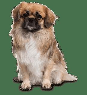 cute-dog-free-img
